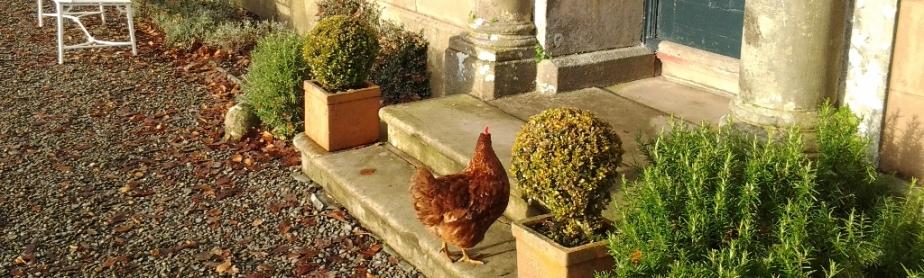 An unusual visitor to Belmount Hall Wedding Venue near Hawkshead, Ambleside